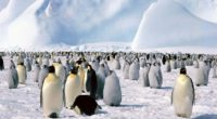 penguins flock north snow mountain 4k 1542242336 200x110 - penguins, flock, north, snow, mountain 4k - Penguins, North, flock