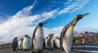 penguins following leader 1542239387 200x110 - Penguins Following Leader - penguins wallpapers, hd-wallpapers, birds wallpapers, animals wallpapers, 4k-wallpapers
