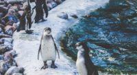 penguins shore birds 4k 1542242613 200x110 - penguins, shore, birds 4k - Shore, Penguins, Birds