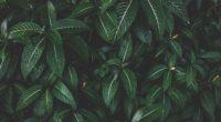 plant leaves green striped bush 4k 1541116868 200x110 - plant, leaves, green, striped, bush 4k - Plant, Leaves, green
