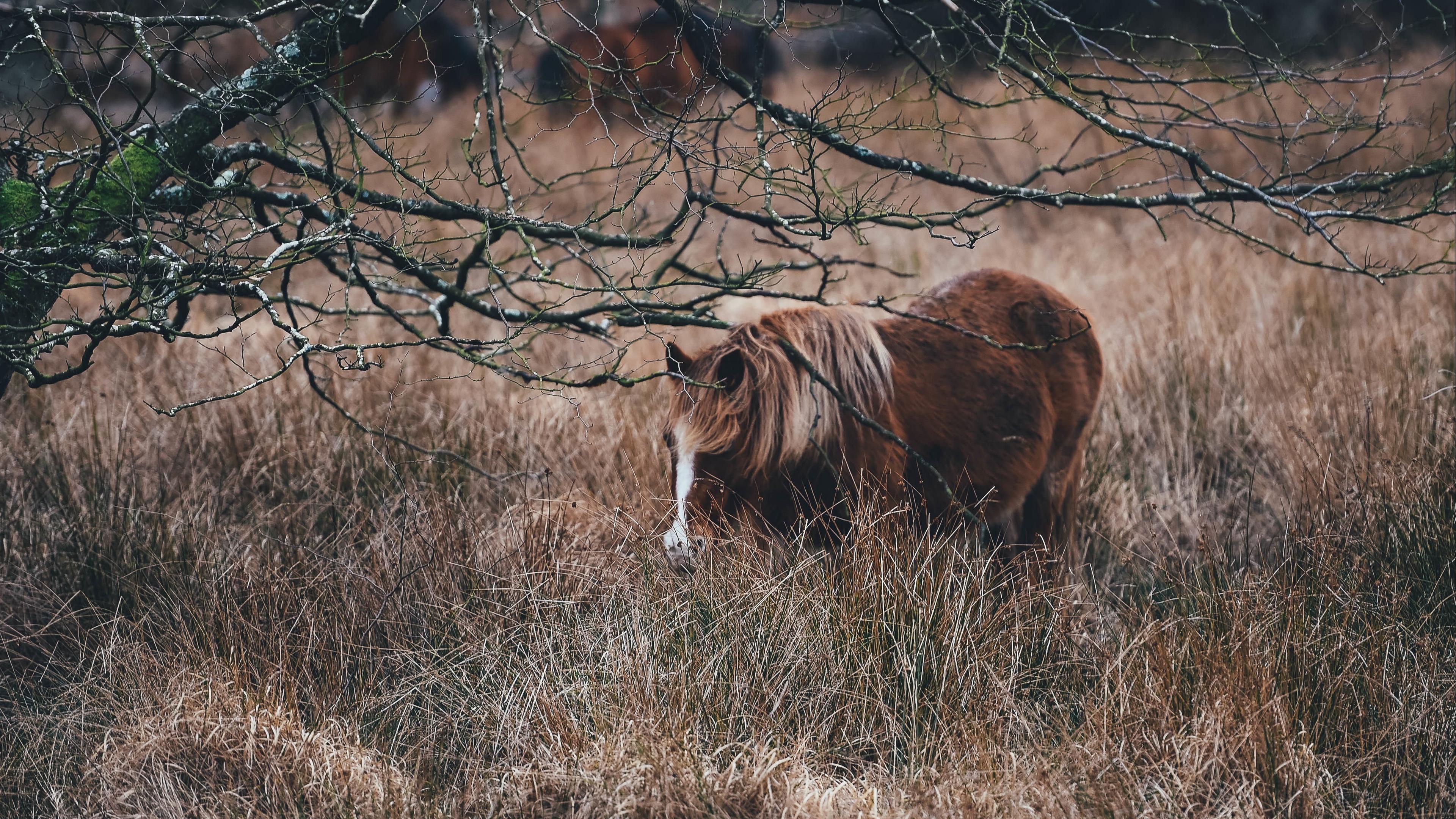 pony horse grass pasture 4k 1542241669 - pony, horse, grass, pasture 4k - Pony, horse, Grass