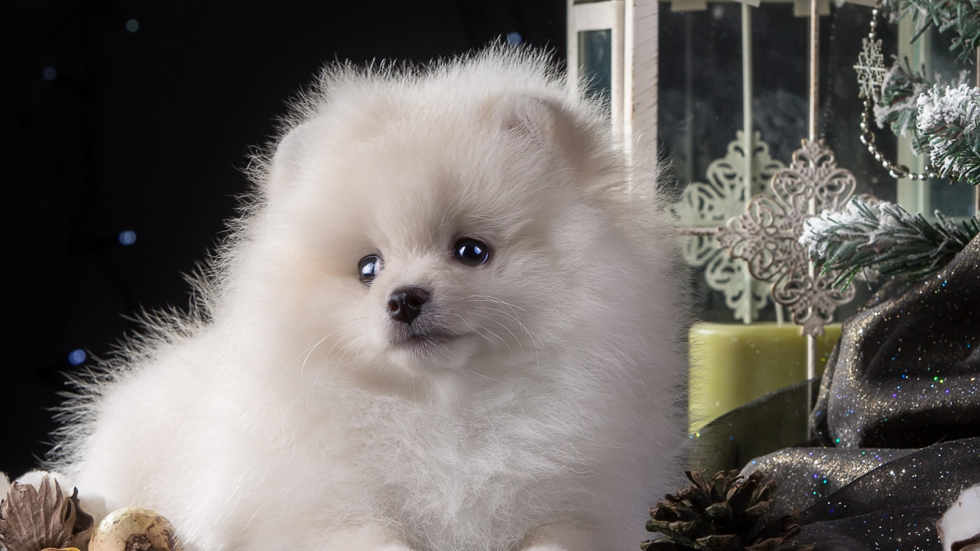 puppy white cute 4k 1542237835 - Puppy White Cute 4k - puppy wallpapers, dog wallpapers, cute wallpapers, animals wallpapers