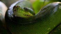python snake head scales 4k 1542242408 200x110 - python, snake, head, scales 4k - Snake, python, Head