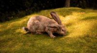 rabbit 4k 1542239654 200x110 - Rabbit 4k - rabbit wallpapers, hd-wallpapers, animals wallpapers, 4k-wallpapers