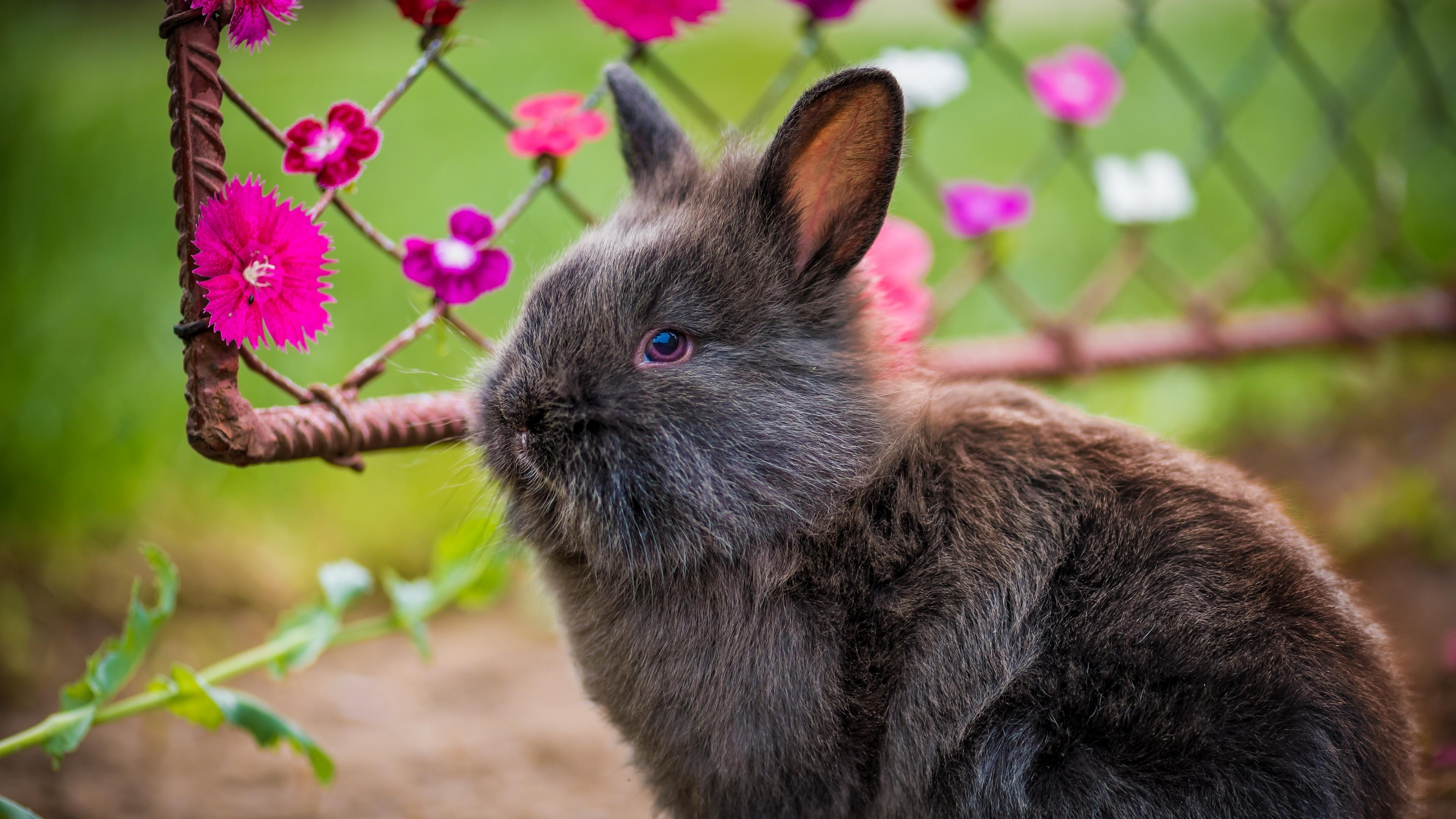 rabbit fluffy flowers 4k 1542241404 - rabbit, fluffy, flowers 4k - Rabbit, fluffy, Flowers