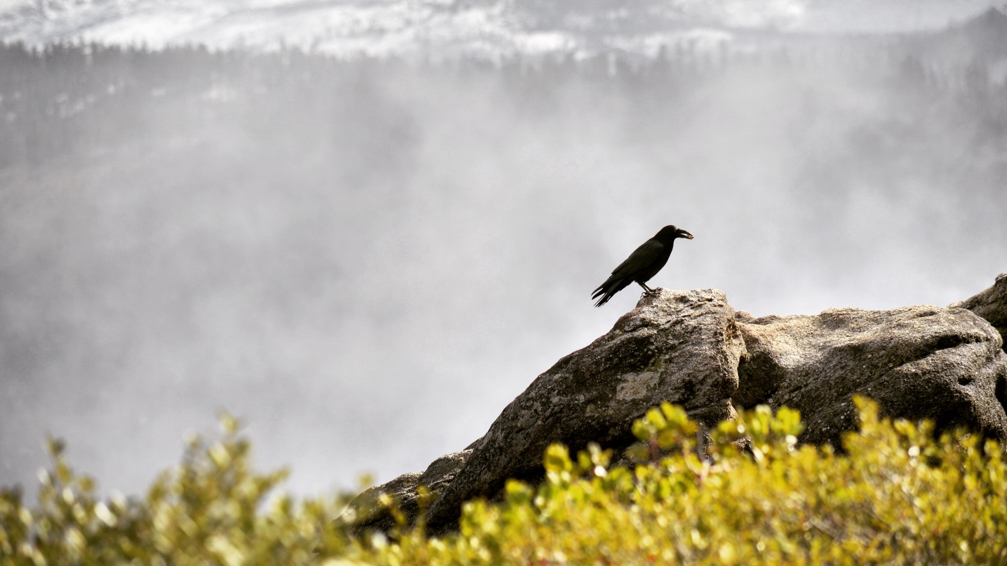 raven bird grass mountains 4k 1542241371 - raven, bird, grass, mountains 4k - Raven, Grass, Bird