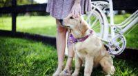 retriever dog 4k 1542237845 200x110 - Retriever Dog 4k - labrador retriever wallpapers, dog wallpapers, animals wallpapers
