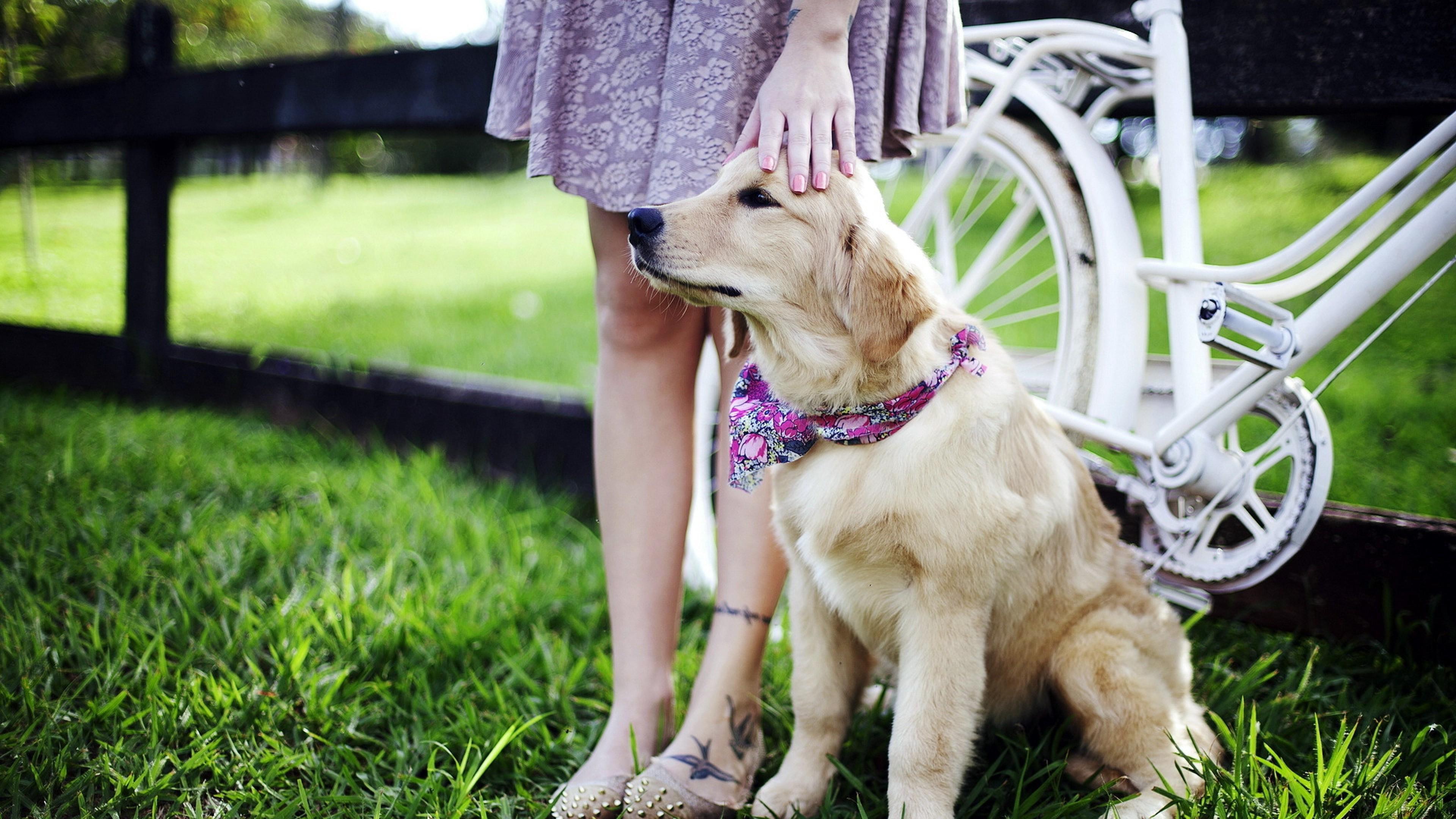retriever dog 4k 1542237845 - Retriever Dog 4k - labrador retriever wallpapers, dog wallpapers, animals wallpapers