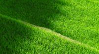 rice field yamada grass pathway 4k 1541114386 200x110 - rice field, yamada, grass, pathway 4k - yamada, rice field, Grass