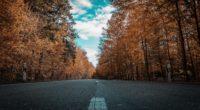 road autumn trees 4k 1541114357 200x110 - road, autumn, trees 4k - Trees, Road, Autumn