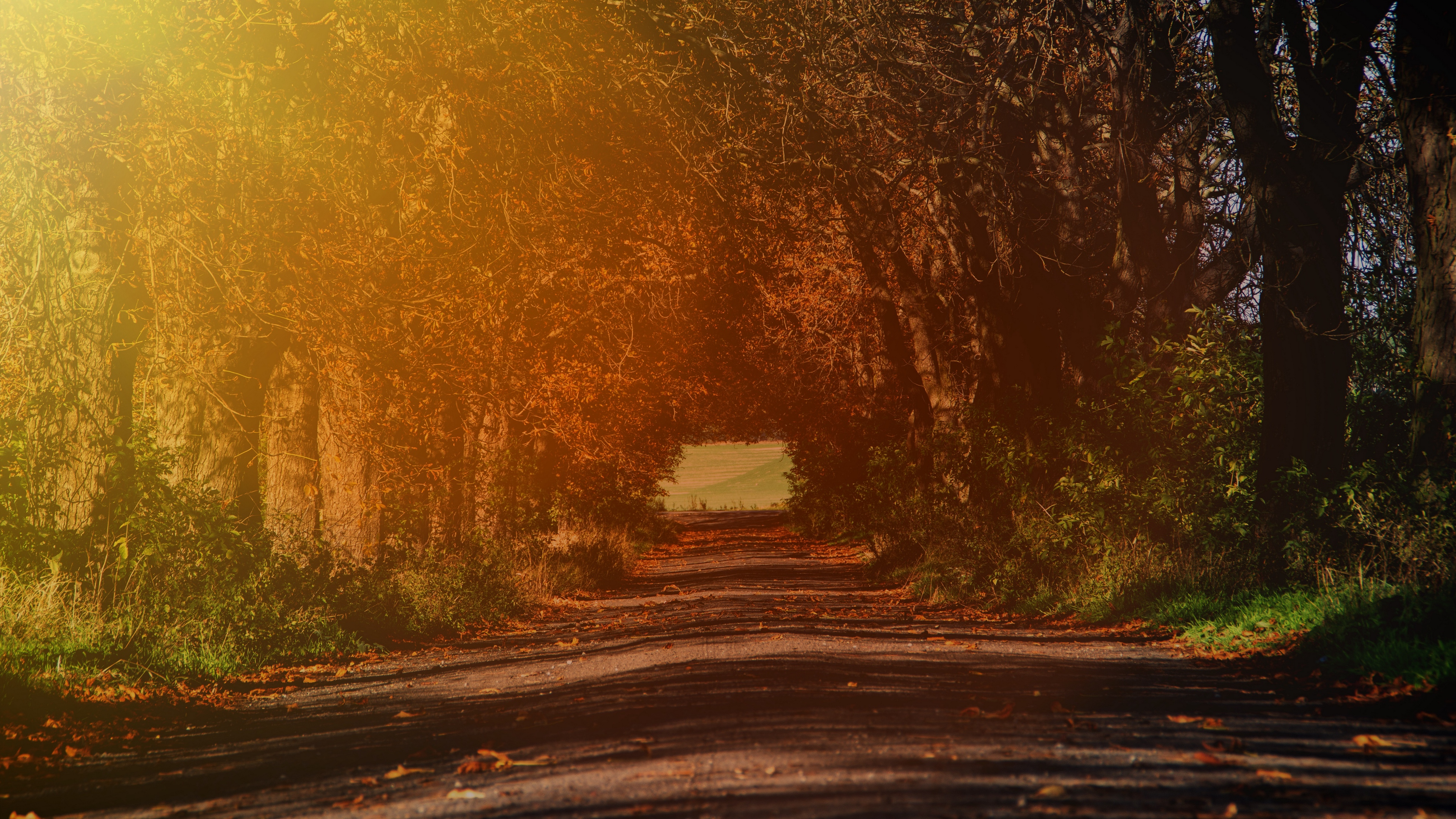 road branches autumn sunlight trees 4k 1541113715 - road, branches, autumn, sunlight, trees 4k - Road, branches, Autumn