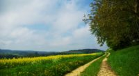 road country summer flowers yellow day glade 4k 1541116120 200x110 - road, country, summer, flowers, yellow, day, glade 4k - Summer, Road, Country
