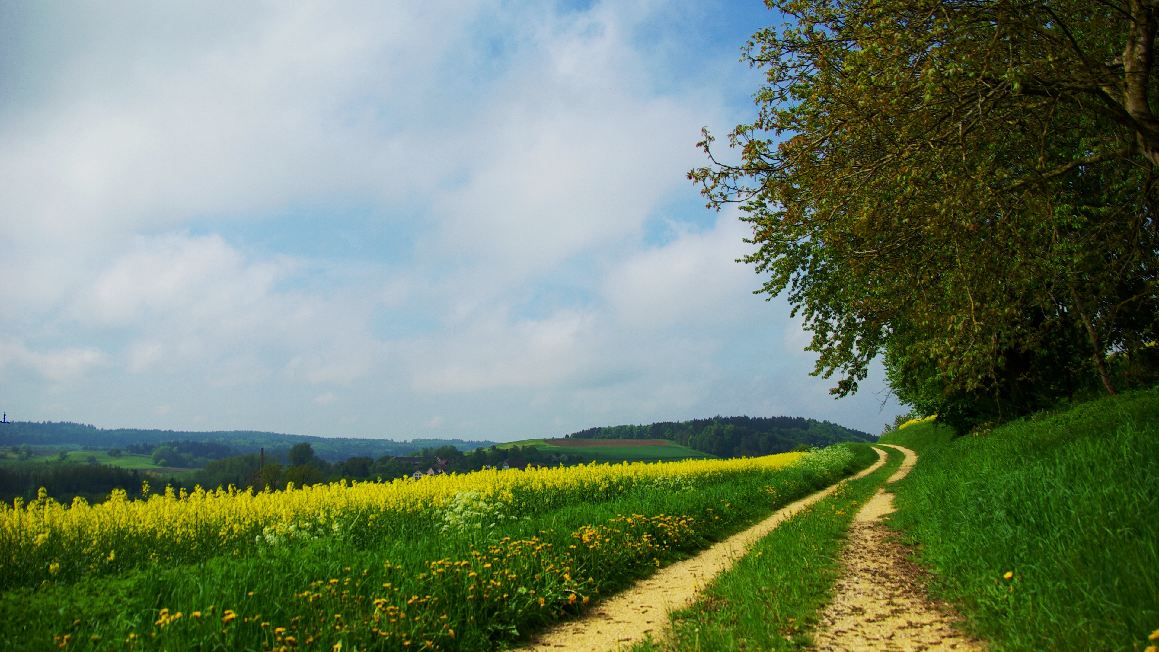 road country summer flowers yellow day glade 4k 1541116120 - road, country, summer, flowers, yellow, day, glade 4k - Summer, Road, Country