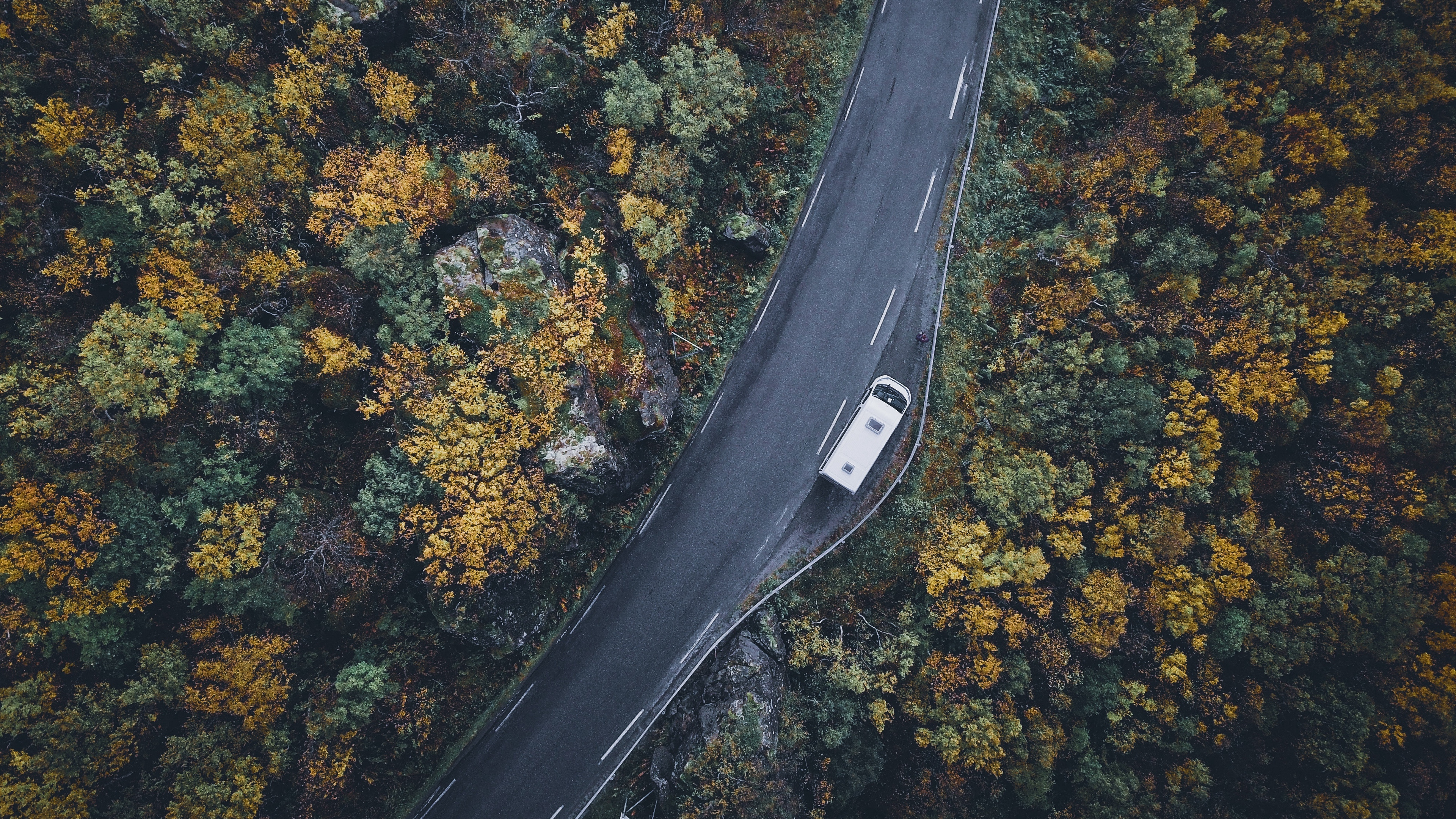 road top view trees autumn car 4k 1541117313 - road, top view, trees, autumn, car 4k - Trees, top view, Road
