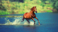 running horse in water 4k 1542238193 200x110 - Running Horse In Water 4k - horse wallpapers, animals wallpapers