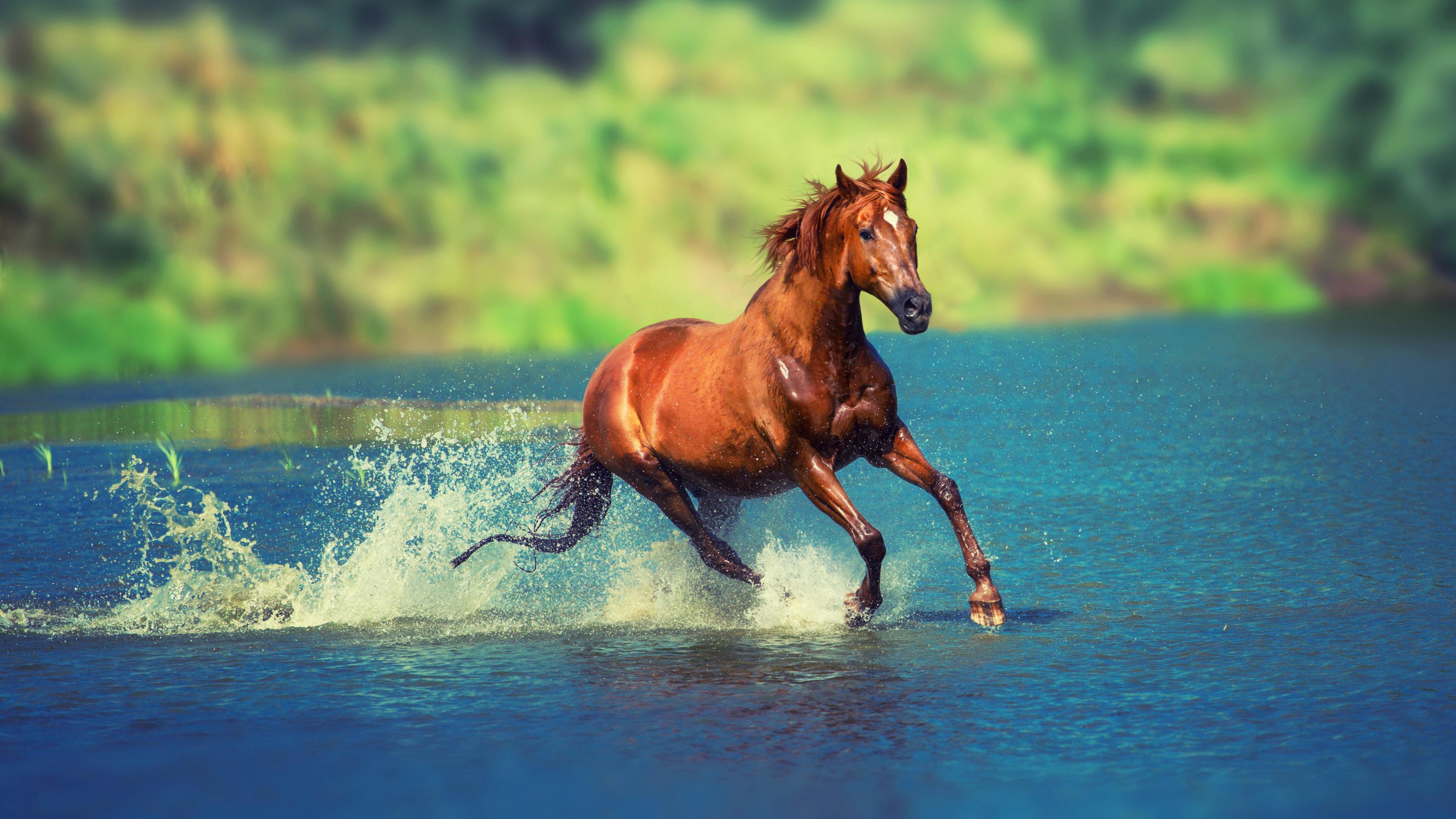 Wallpaper 4k Running Horse In Water 4k Animals Wallpapers Horse Wallpapers