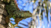 salamander reptile amphibian 4k 1542242263 200x110 - salamander, reptile, amphibian 4k - salamander, reptile, amphibian
