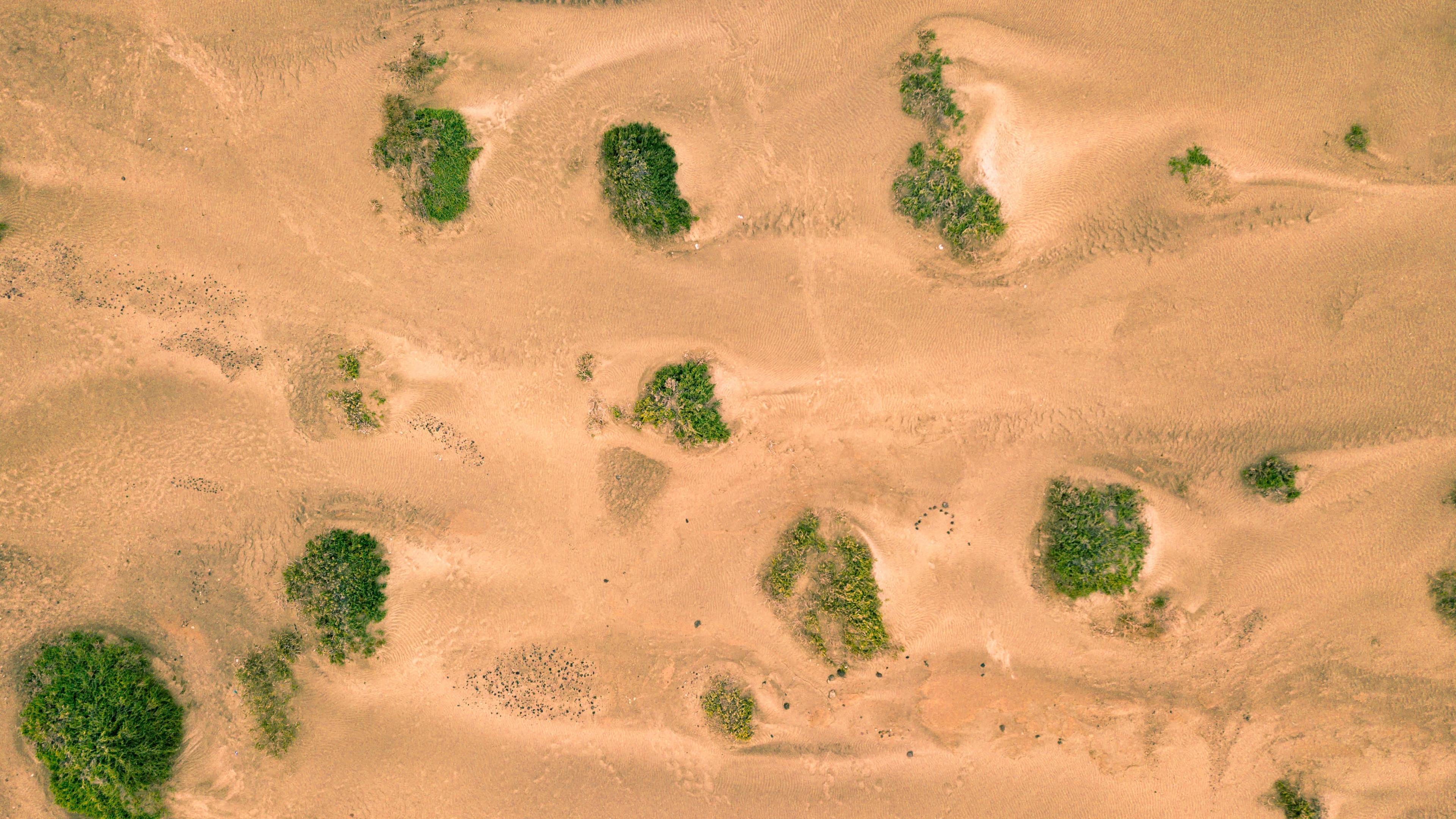 sand desert dunes vegetation 4k 1541115461 - sand, desert, dunes, vegetation 4k - Sand, Dunes, Desert
