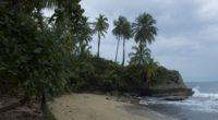 sea beach palm trees landscape 4k 1541117604 200x110 - sea, beach, palm trees, landscape 4k - Sea, palm trees, Beach