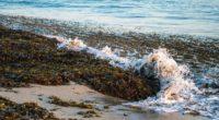 sea foam seaweed landscape 4k 1541117729 200x110 - sea, foam, seaweed, landscape 4k - seaweed, Sea, foam