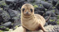 sea lion galapagos islands look 4k 1542241838 200x110 - sea lion, galapagos islands, look 4k - sea lion, look, galapagos islands