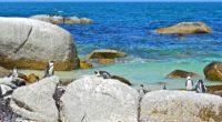 sea rocks penguins landscape 4k 1542242703 200x110 - sea, rocks, penguins, landscape 4k - Sea, Rocks, Penguins