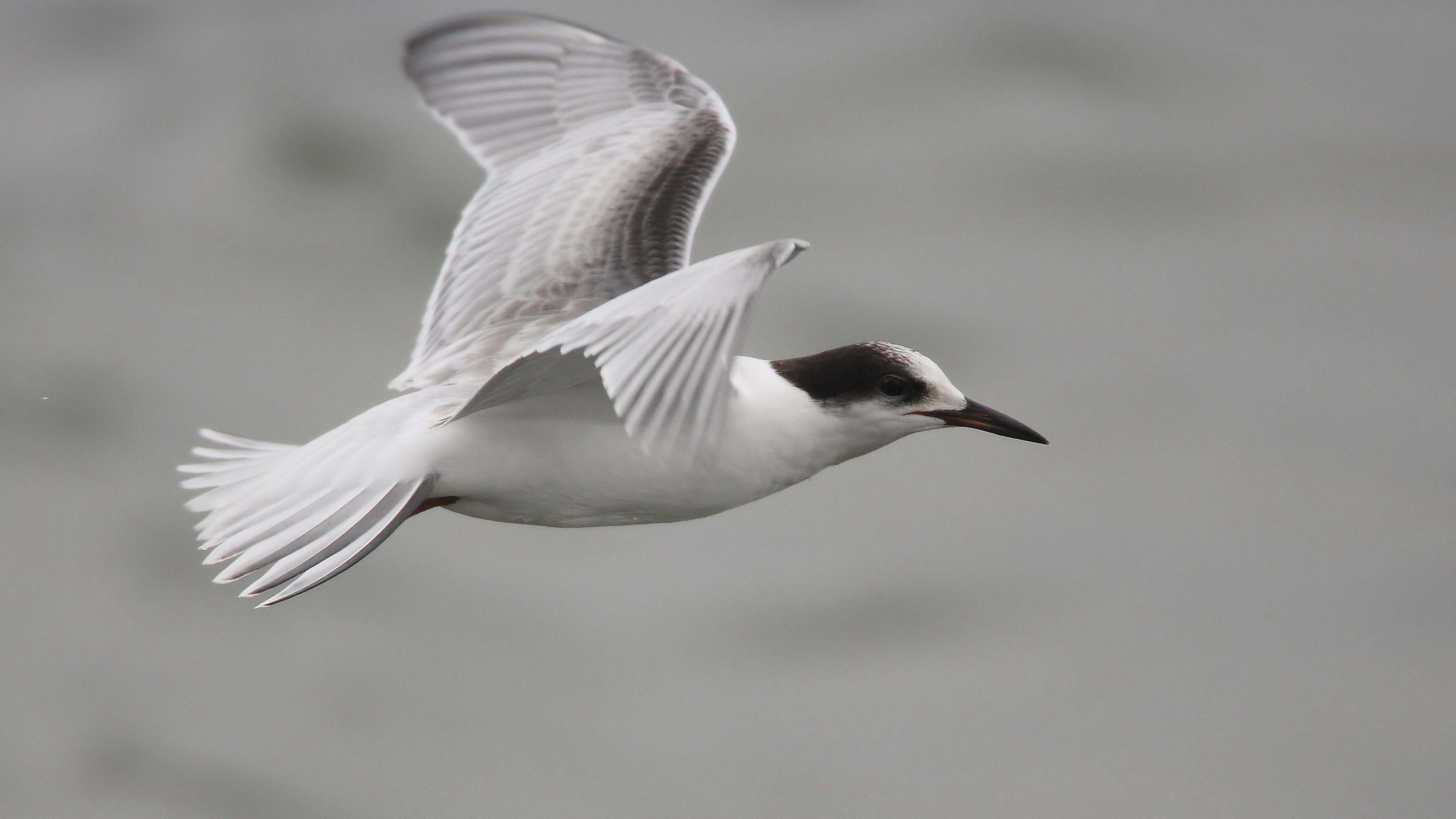 seagull flying sea 4k 1542242657 - seagull, flying, sea 4k - Seagull, Sea, Flying