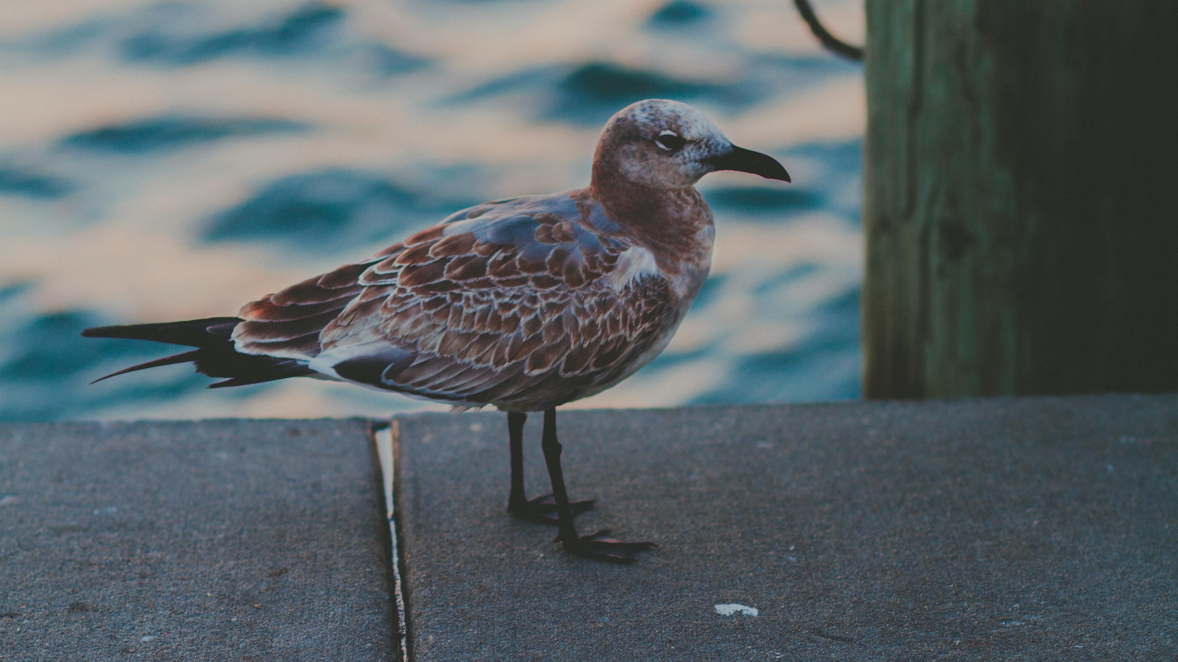 seagull sea bird spotted 4k 1542243057 - seagull, sea, bird, spotted 4k - Seagull, Sea, Bird