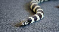 snake reptile head color 4k 1542241377 200x110 - snake, reptile, head, color 4k - Snake, reptile, Head