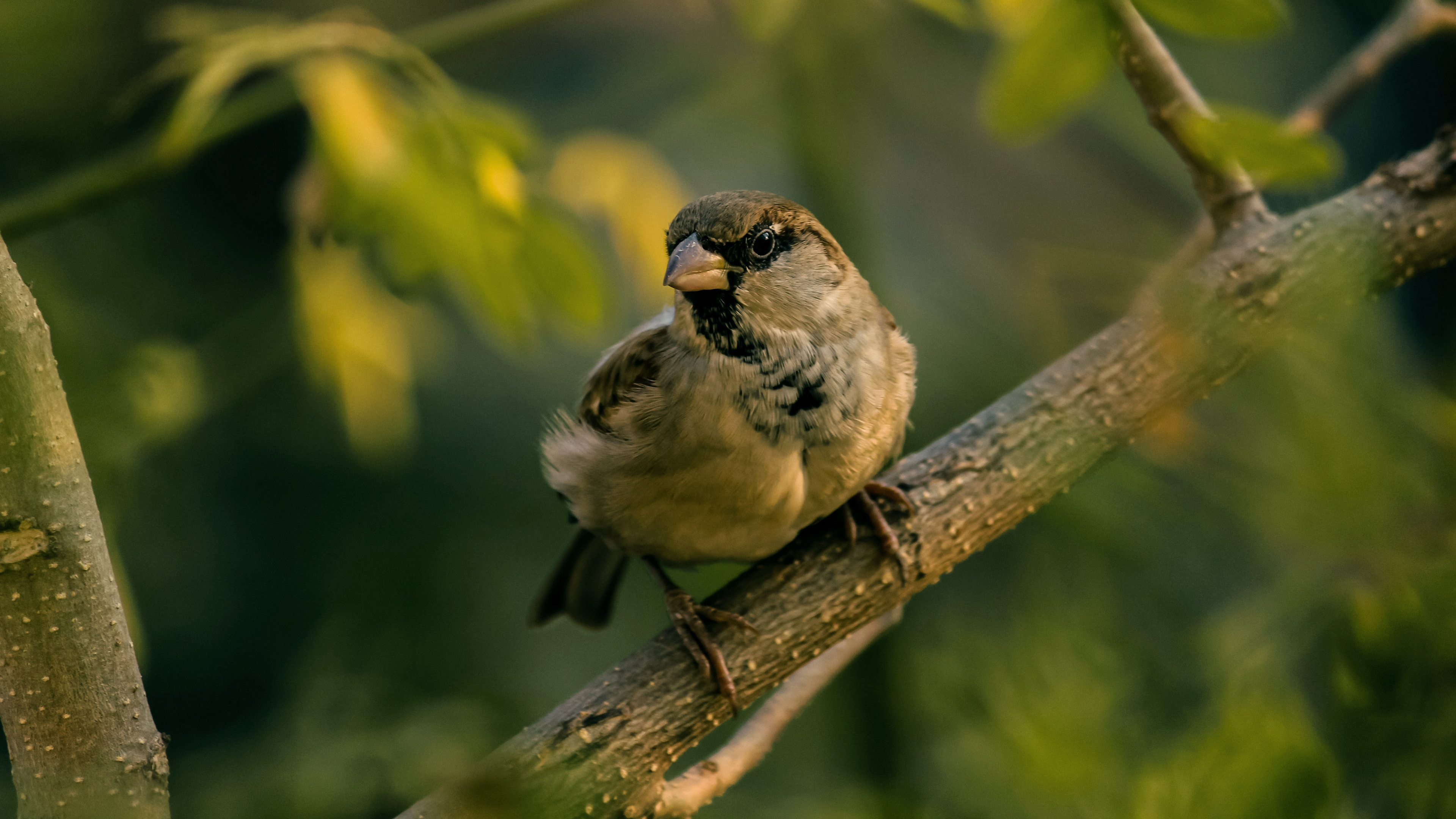 sparrow bird blur 4k 1542243033 - sparrow, bird, blur 4k - Sparrow, Blur, Bird