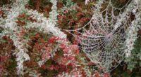 spider web tree branch hoarfrost 4k 1541114834 200x110 - spider web, tree, branch, hoarfrost 4k - tree, spider web, branch