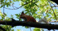 squirrel animal face sitting 4k 1542242695 200x110 - squirrel, animal, face, sitting 4k - Squirrel, Face, Animal