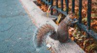 squirrel animal fence stand 4k 1542241753 200x110 - squirrel, animal, fence, stand 4k - Squirrel, fence, Animal