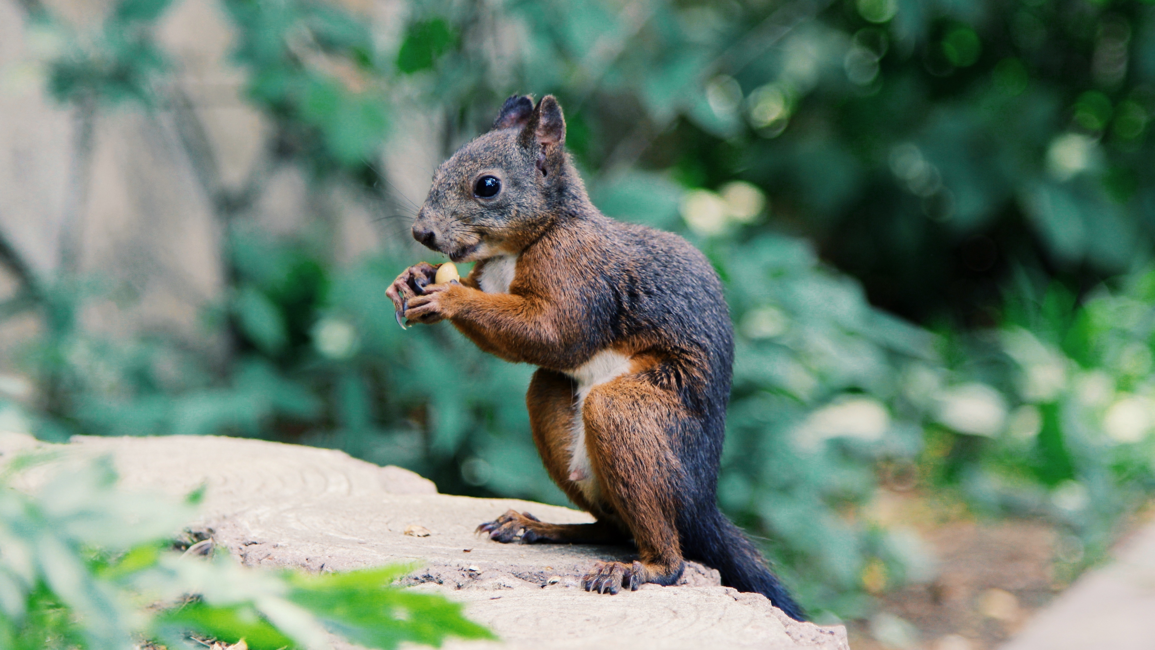 squirrel food rodent 4k 1542241415 - squirrel, food, rodent 4k - Squirrel, rodent, food