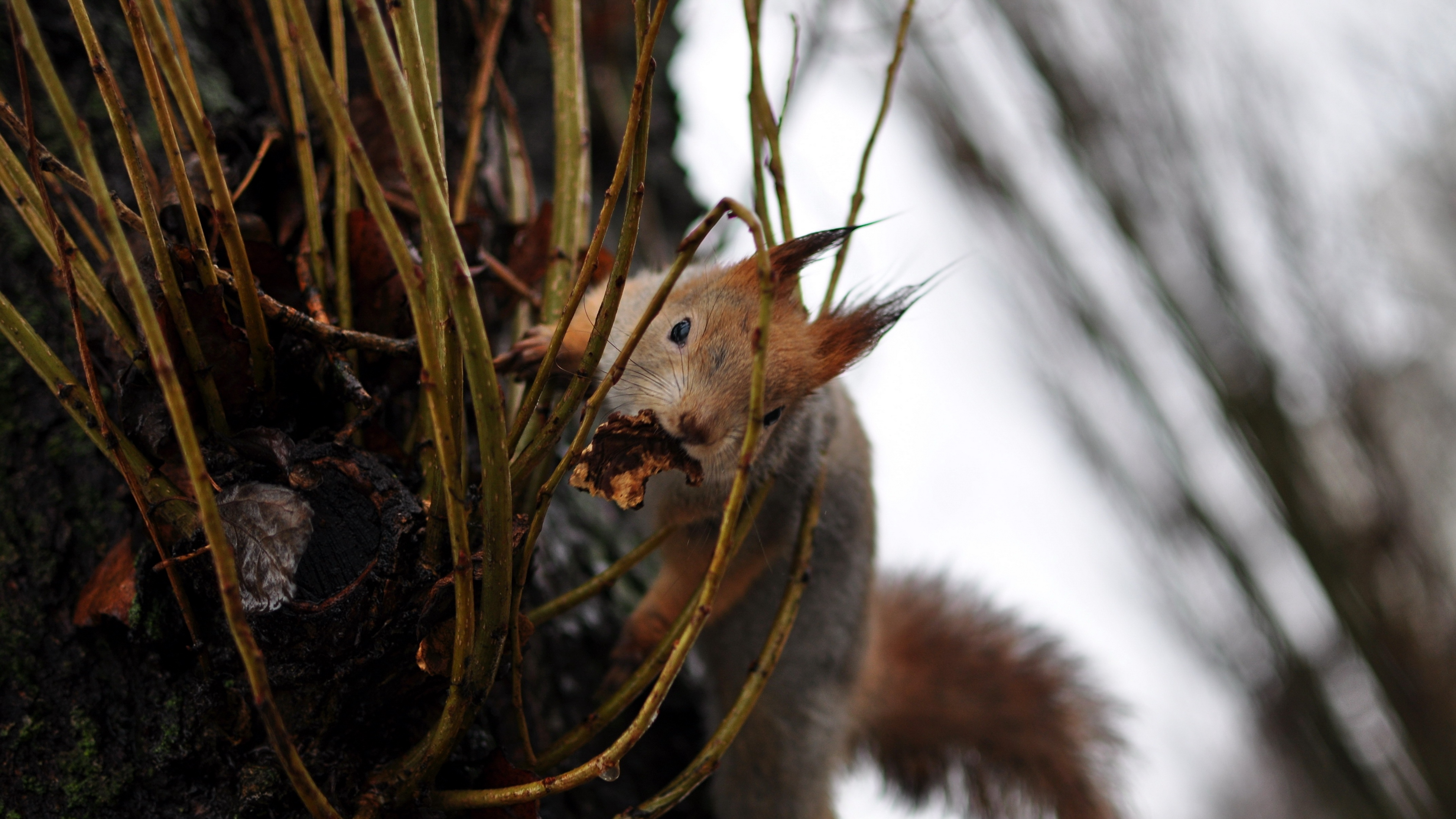 squirrel grass climb 4k 1542242646 - squirrel, grass, climb 4k - Squirrel, Grass, climb