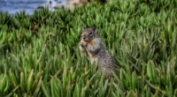 squirrel rodent grass 4k 1542241493 200x110 - squirrel, rodent, grass 4k - Squirrel, rodent, Grass