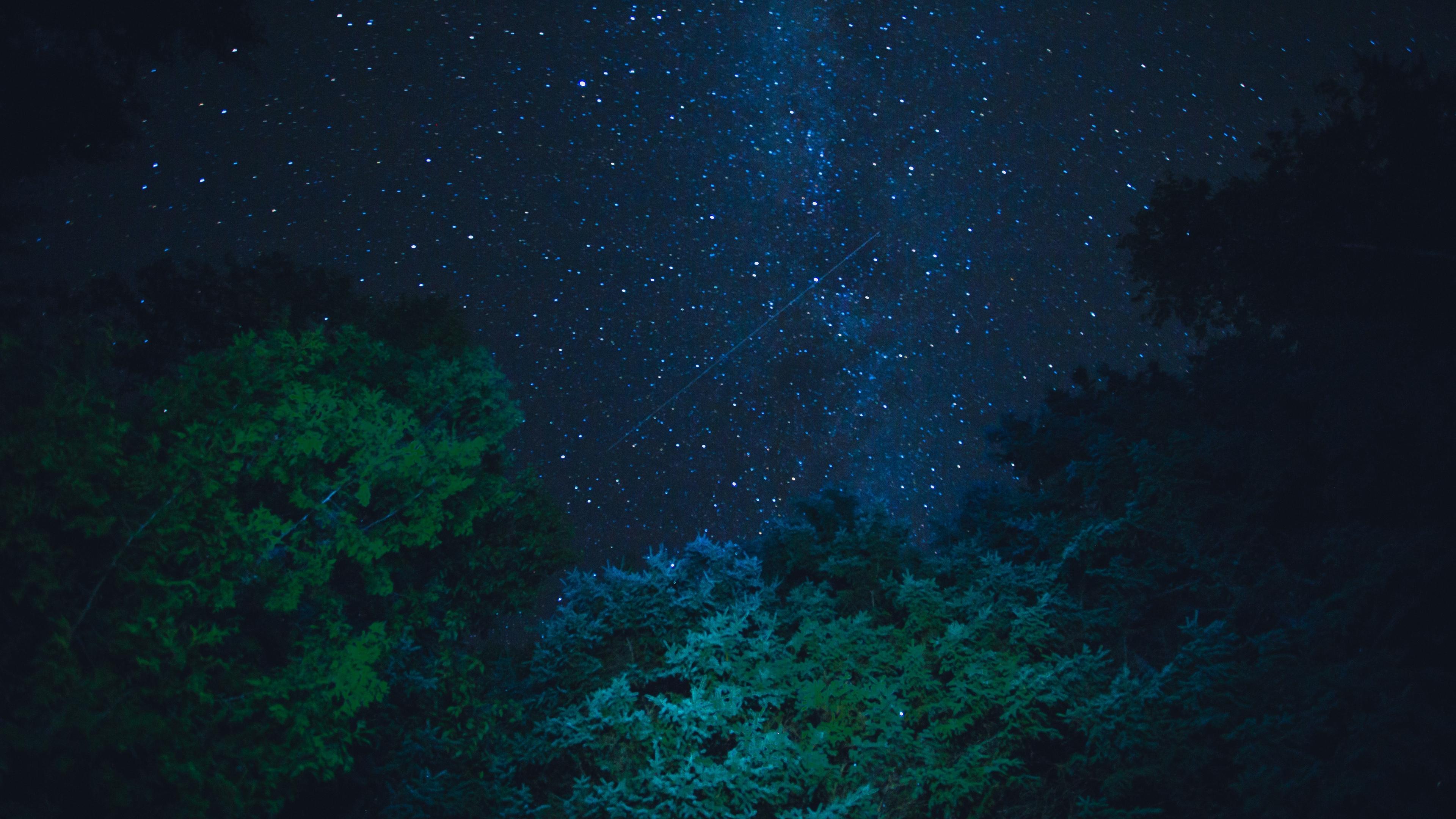 starry sky stars night trees 4k 1541114095 - starry sky, stars, night, trees 4k - Stars, starry sky, Night