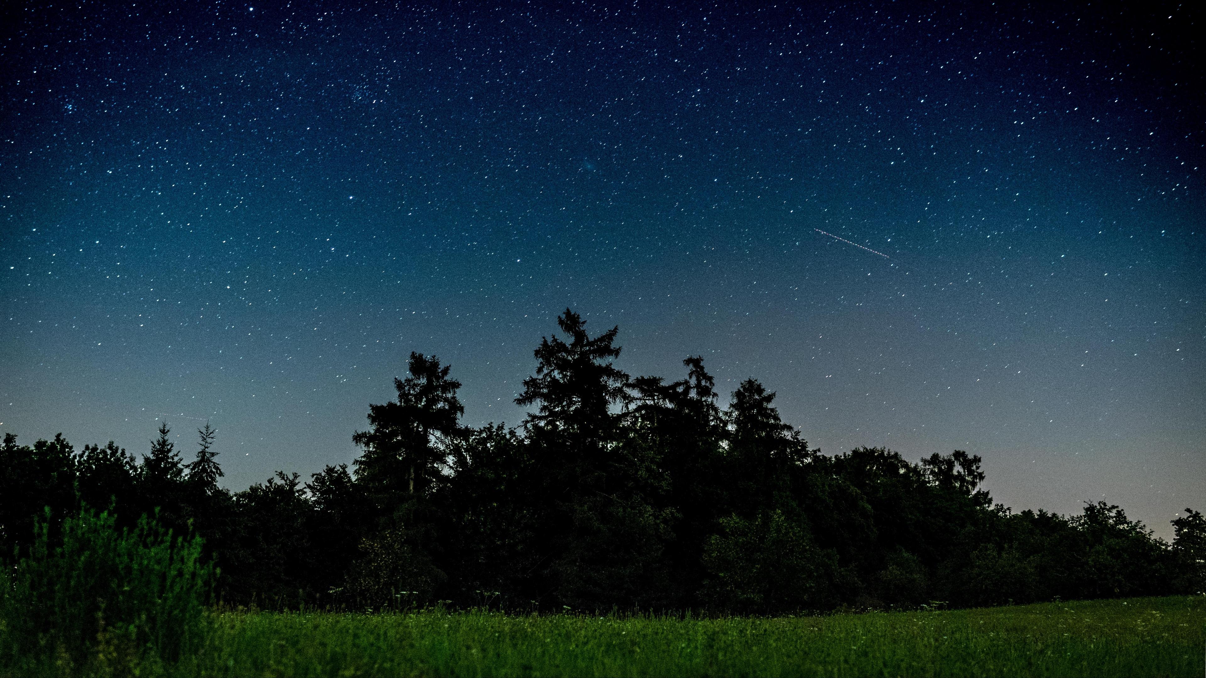 starry sky trees night field 4k 1541115460 - starry sky, trees, night, field 4k - Trees, starry sky, Night