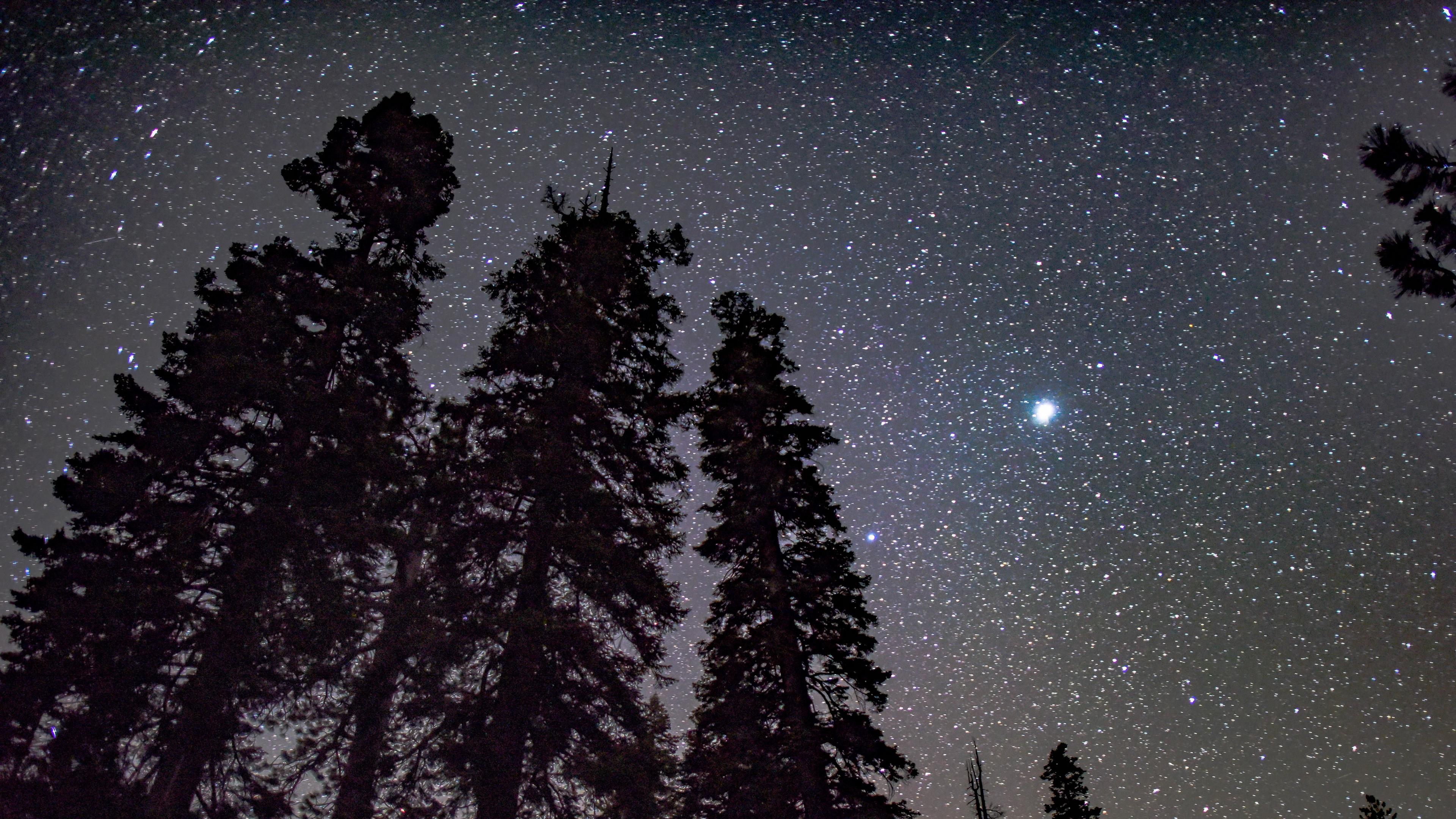 starry sky trees night stars glitter radiance 4k 1541117780 - starry sky, trees, night, stars, glitter, radiance 4k - Trees, starry sky, Night