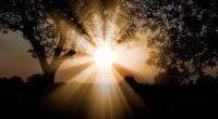 sunlight dawn trees branches 4k 1541114227 200x110 - sunlight, dawn, trees, branches 4k - Trees, Sunlight, Dawn
