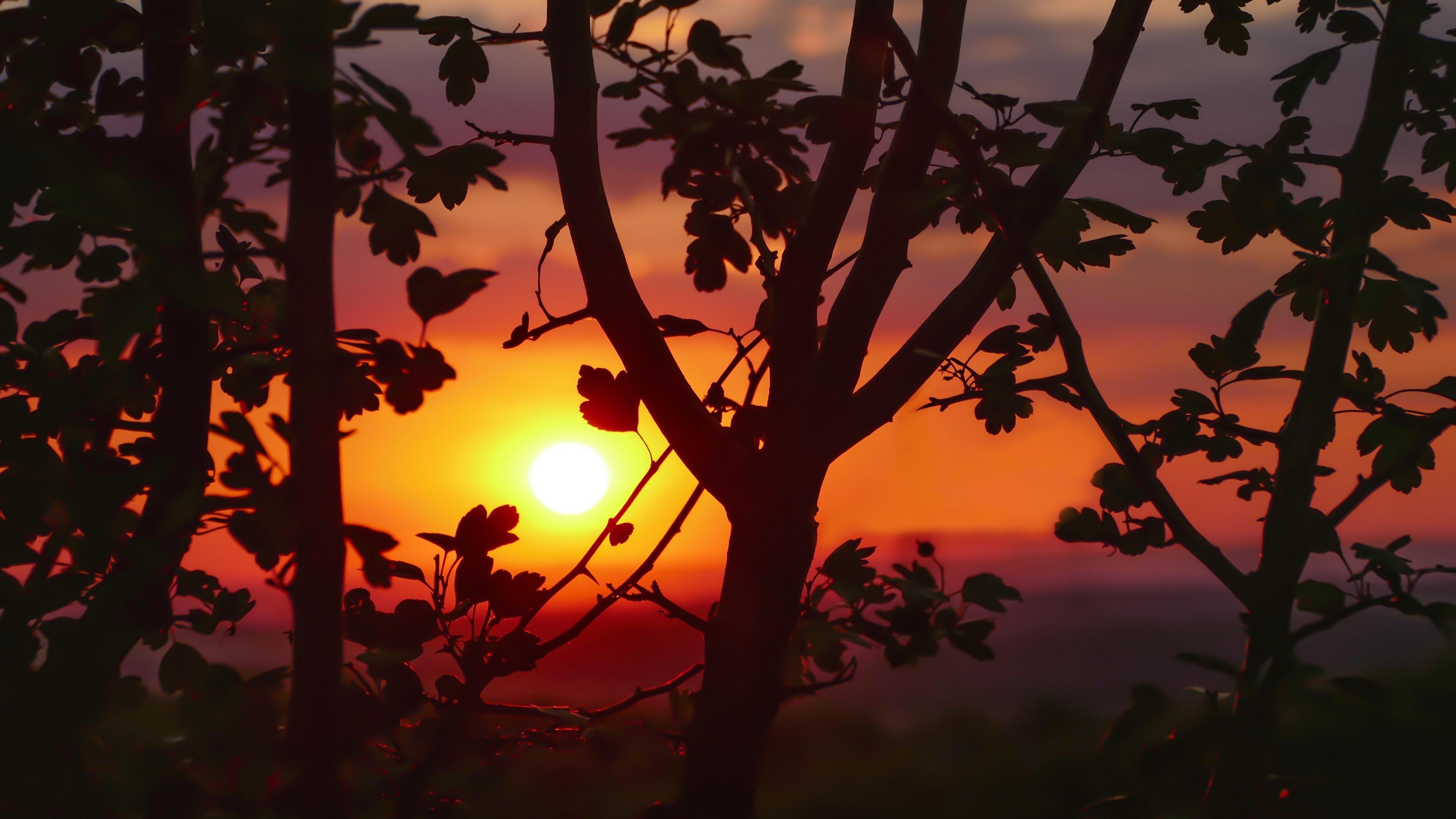 sunset branches leaves 4k 1541116069 - sunset, branches, leaves 4k - sunset, Leaves, branches