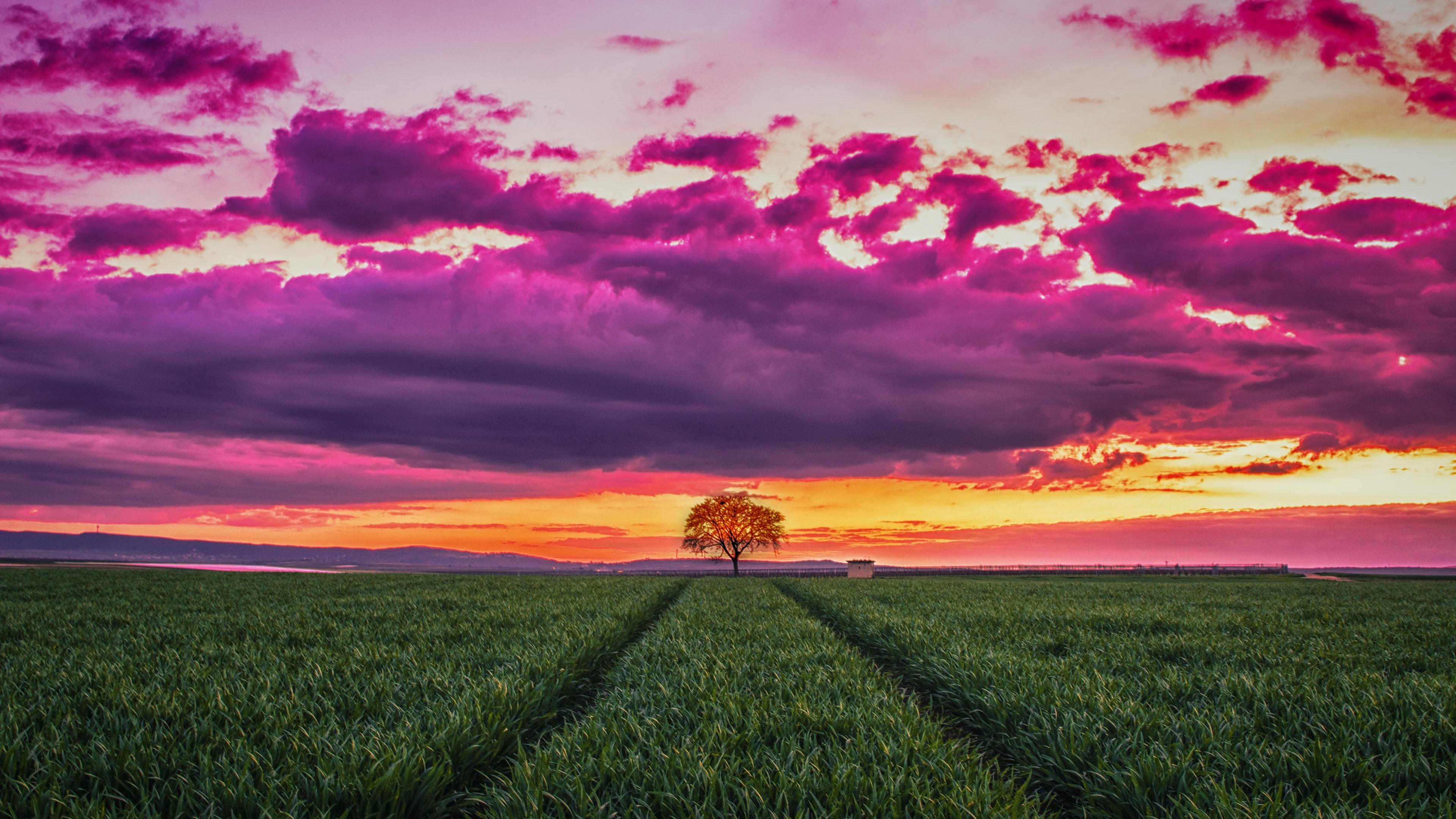 sunset horizon field tree grass clouds 4k 1541114605 - sunset, horizon, field, tree, grass, clouds 4k - sunset, Horizon, Field