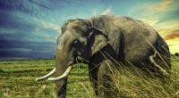 thailand elephant 4k 1542238318 200x110 - Thailand Elephant 4k - hd-wallpapers, elephant wallpapers, animals wallpapers, 5k wallpapers, 4k-wallpapers