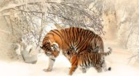 tiger baby felidaee 1542238860 200x110 - Tiger Baby Felidaee - tiger wallpapers, snow wallpapers, hd-wallpapers, animals wallpapers, 4k-wallpapers