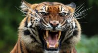 tiger teeths 4k 1542238046 200x110 - Tiger Teeths 4k - tiger wallpapers, teeth wallpapers, predator wallpapers, animals wallpapers