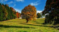 tree autumn forest idyll 4k 1541116065 200x110 - tree, autumn, forest, idyll 4k - tree, Forest, Autumn