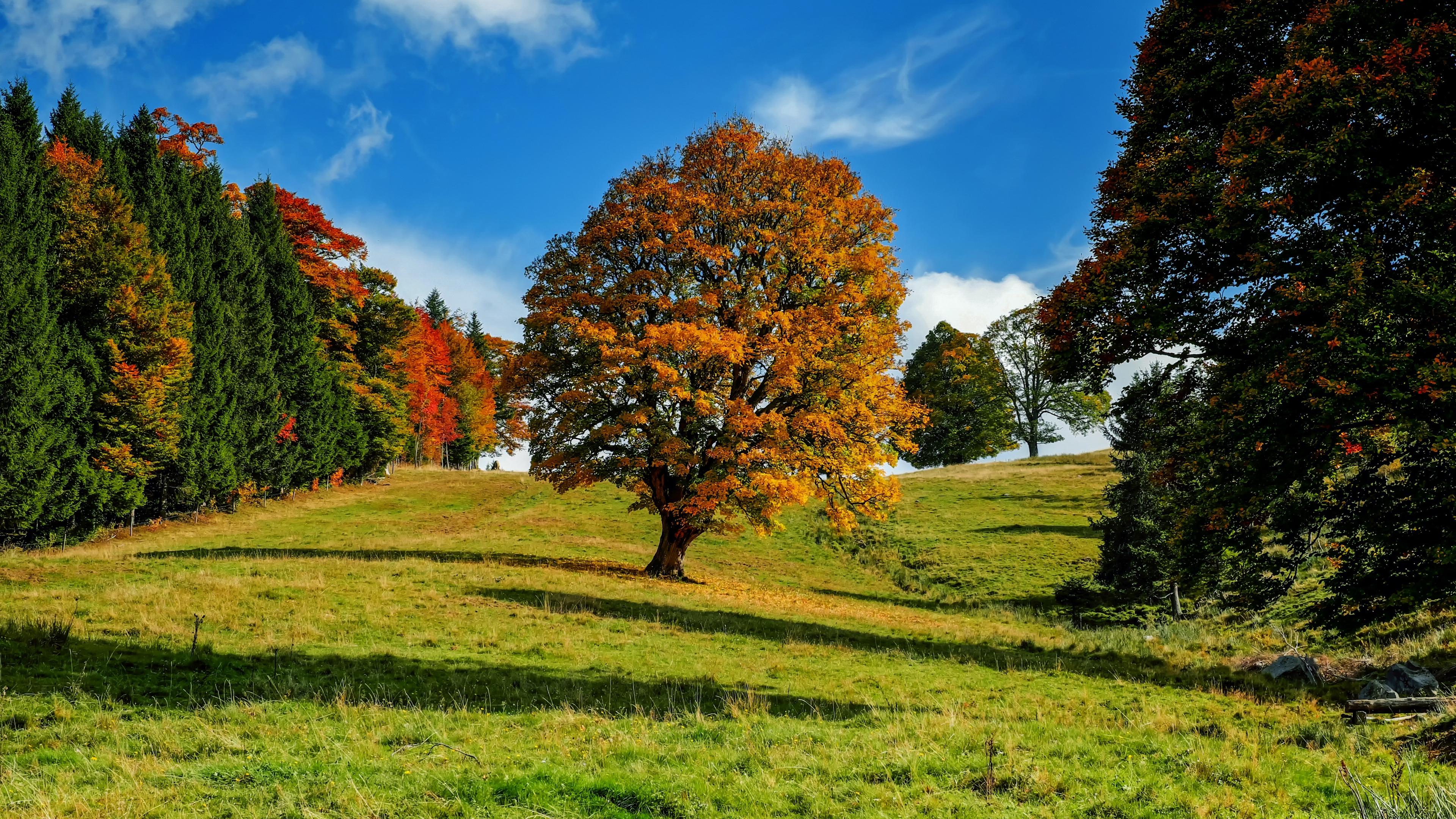 tree autumn forest idyll 4k 1541116065 - tree, autumn, forest, idyll 4k - tree, Forest, Autumn