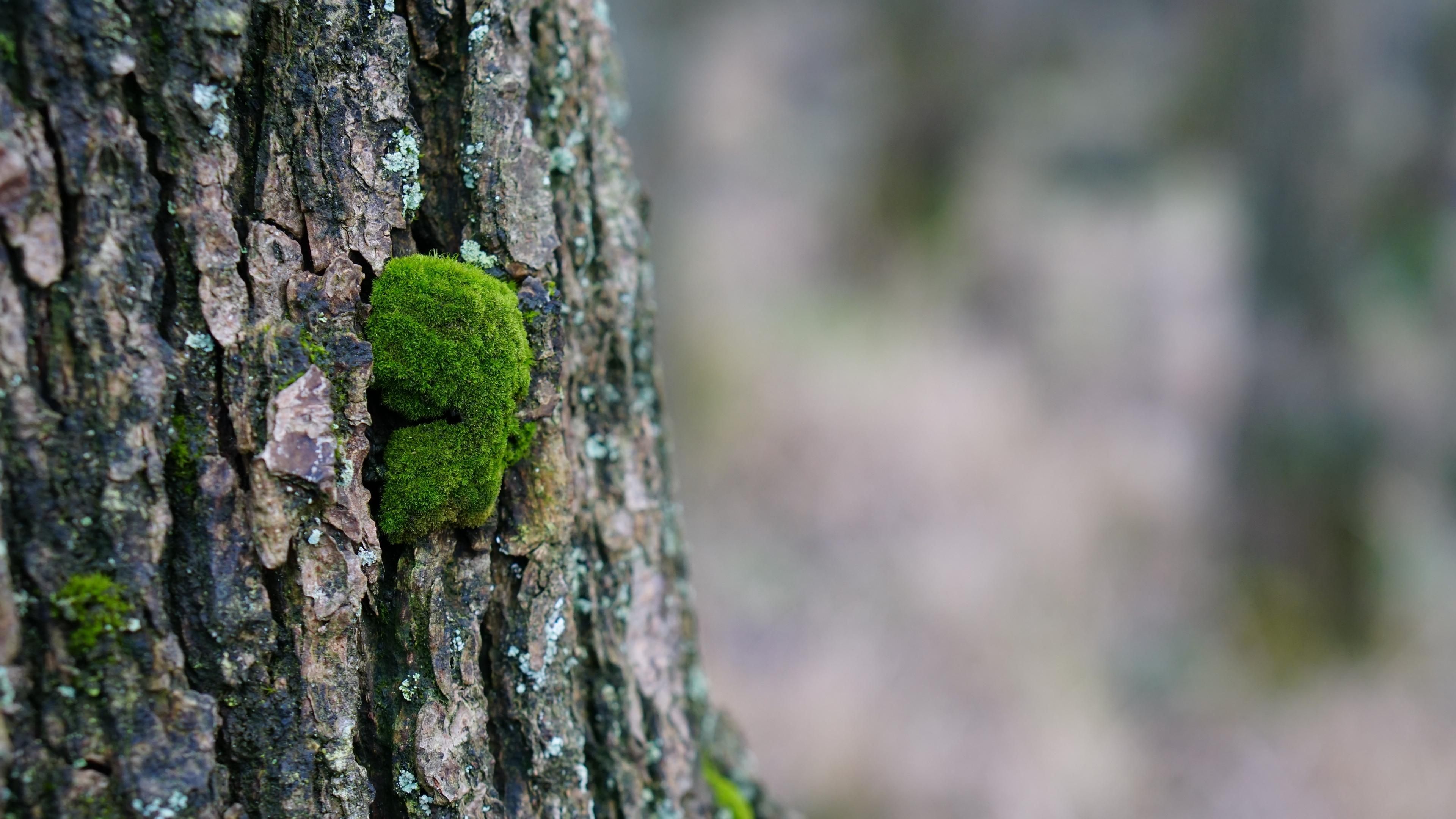 tree bark wood moss 4k 1541117893 - tree bark, wood, moss 4k - wood, tree bark, moss