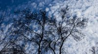 tree branches clouds 4k 1541114759 200x110 - tree, branches, clouds 4k - tree, Clouds, branches