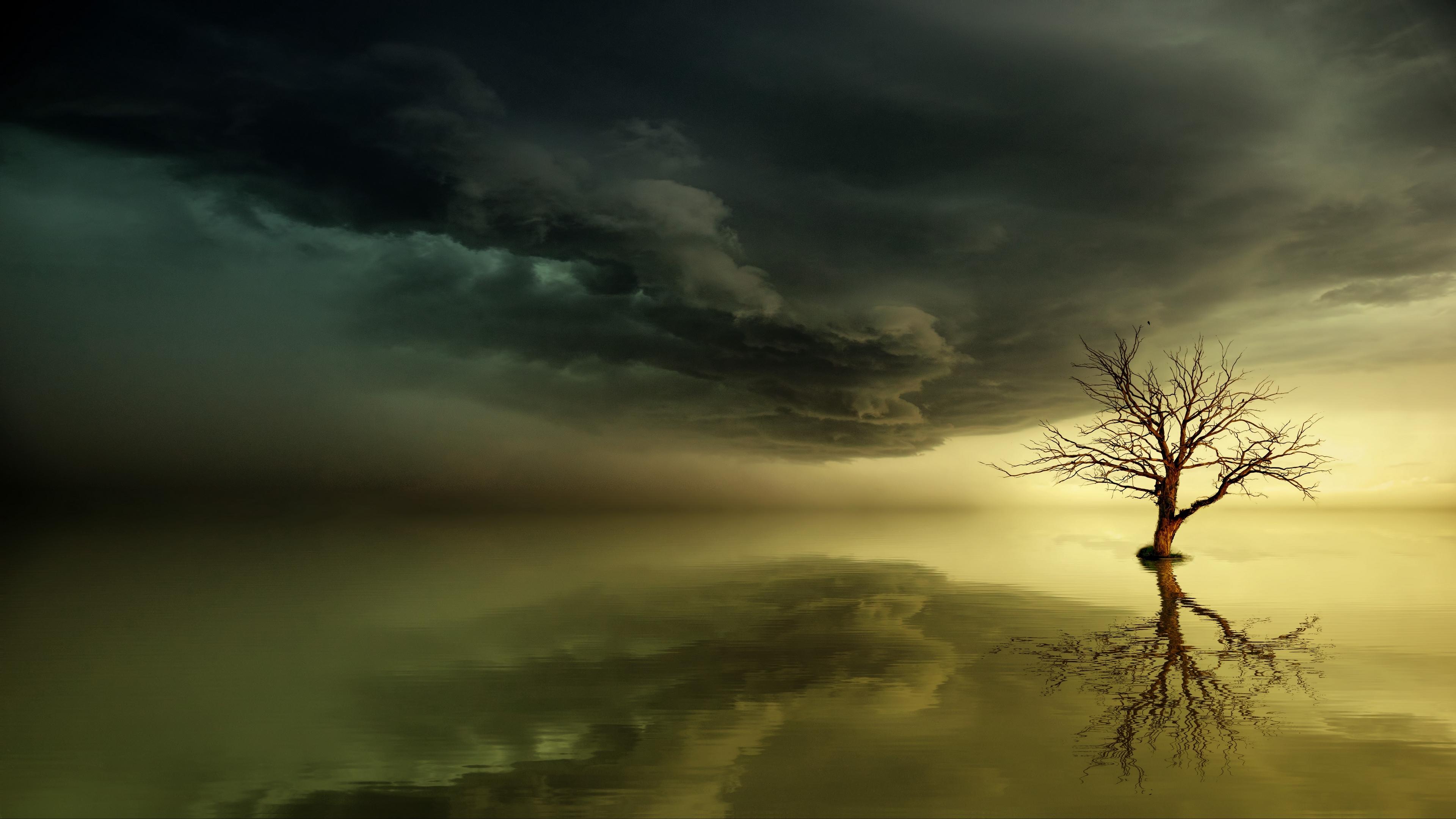 tree lonely reflection horizon 4k 1541117446 - tree, lonely, reflection, horizon 4k - tree, reflection, Lonely